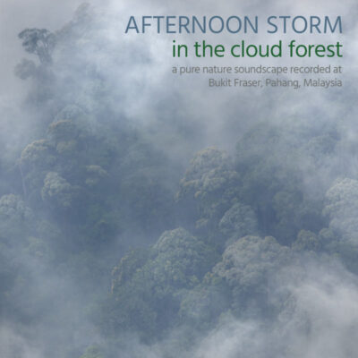 Afternoon Storm in the Cloud Forest - Album Cover