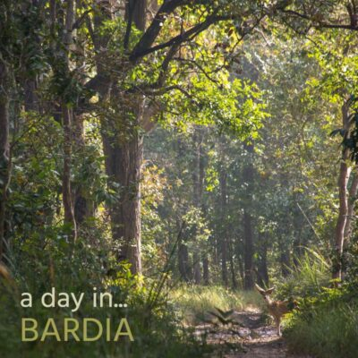 A Day in Bardia - Album Cover